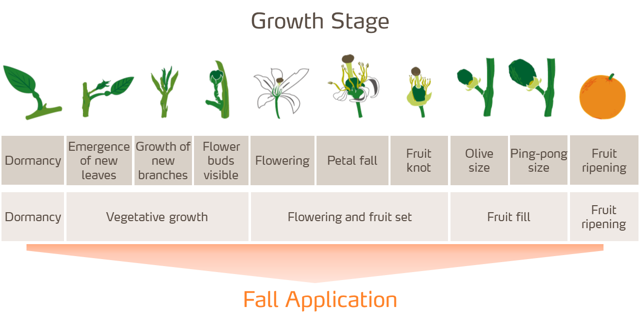 citrus-stages-fall-app-LC.png