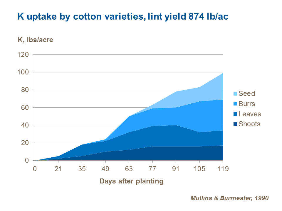 Role of Potassium in Cotton Production | Yara United States